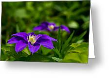 Purple Clematis Flower Greeting Card