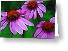 Purple Coneflower Trio Greeting Card