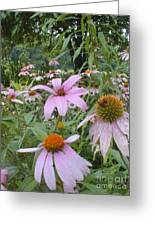 Purple Coneflowers Greeting Card