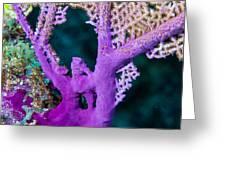 Purple Coral Greeting Card