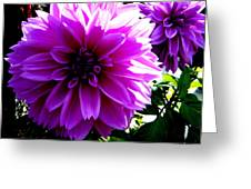 Purple Dahlia Greeting Card