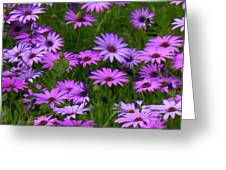 Purple Daisies Square Greeting Card