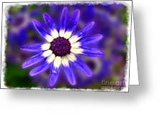 Purple Daisy Photoart Greeting Card