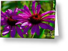 Purple Daisy's Greeting Card
