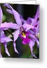 Purple Dance Greeting Card