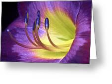 Purple Daylily Greeting Card