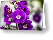Purple Delight Greeting Card