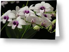 Purple Dendrobium Stem Greeting Card