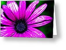 Purple Dew Greeting Card