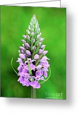Purple Early Morning Orchid Greeting Card