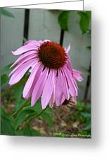 Purple Echinacea Greeting Card