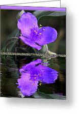 Purple Elegance - Spider Wort Greeting Card