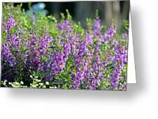 Purple English Garden  Greeting Card