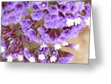 Purple Explosion Greeting Card