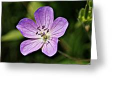 Purple Flower 1 Greeting Card