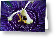 Purple Flower 3 Greeting Card