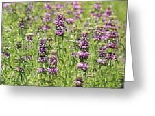 Purple Flower Field Greeting Card