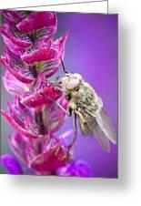 Purple Flower Fly Greeting Card
