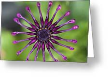 Purple Flower In Bloom Greeting Card