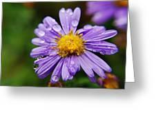 Purple Flower Morning Dew Greeting Card
