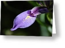 Japanese Iris Petal Greeting Card