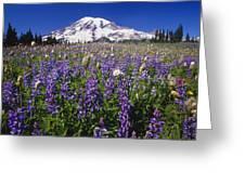 Purple Flowers Blooming Beneath Mount Greeting Card