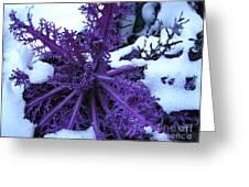 Purple Foliage In Winter Greeting Card