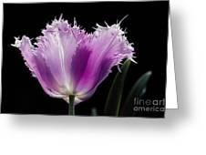 Purple Glow Greeting Card