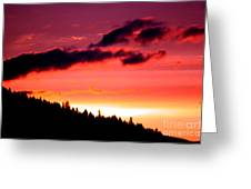 Purple Haze Greeting Card by Nick Gustafson