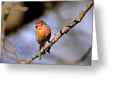 Purple House Finch Greeting Card