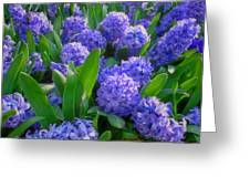 Purple Hyacinths Greeting Card