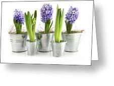 Purple Hyacinths Greeting Card by Sandra Cunningham