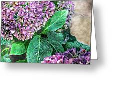 Purple Hydrangeas Greeting Card