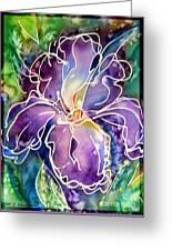 Purple Iris Greeting Card by M C Sturman