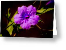Purple Is The Color Greeting Card