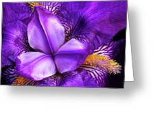Purple Japanese Iris Greeting Card