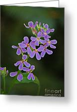 Purple Joy Greeting Card