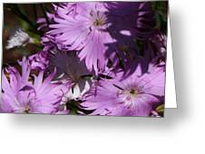 Purple Lace Greeting Card