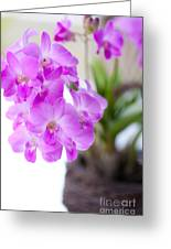 Purple Mini Orchids Greeting Card