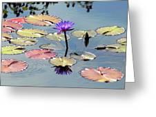 Purple Mirror Greeting Card