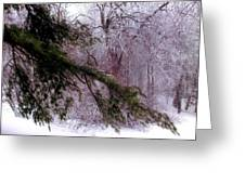 Purple Morning Frost Greeting Card