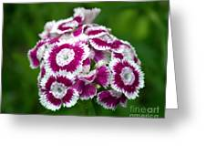Purple On White Flowers Greeting Card
