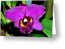 Purple Orchid 006 Greeting Card