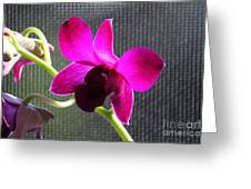 Purple Orchid Aglow Greeting Card