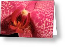 Purple Orchid Heart Greeting Card