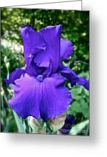 Purple Overload Greeting Card