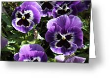 Purple Pansies Square Greeting Card