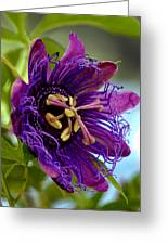 Purple Passion Greeting Card by Michelle Harrington