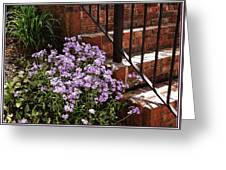 Purple Phlox  Greeting Card