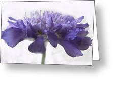 Purple Pincushin Greeting Card
